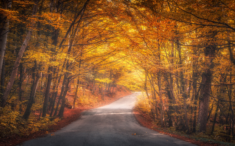 Farnell Land Rover's Guide To Autumn Driving